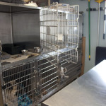 Williston Park Animal Hospital Kennel Area